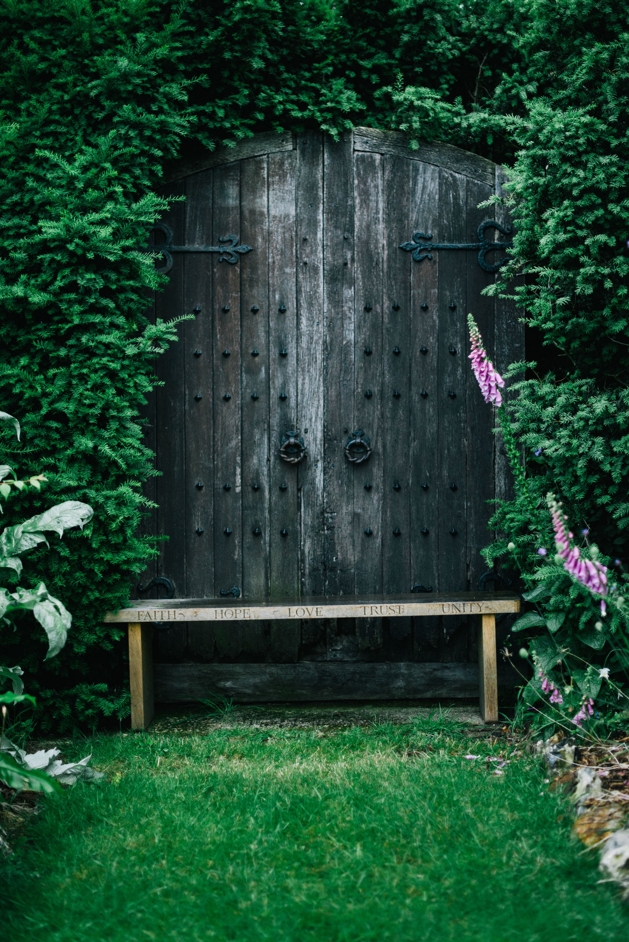Architecture Building Exterior Built Structure Close-up Day Door Flower Grass Green Green Color Green Color Growing Plants Growth Ivy Lonely Nature No People Outdoors Plant Single Flower Single Life  Single Object Tree Wood - Material