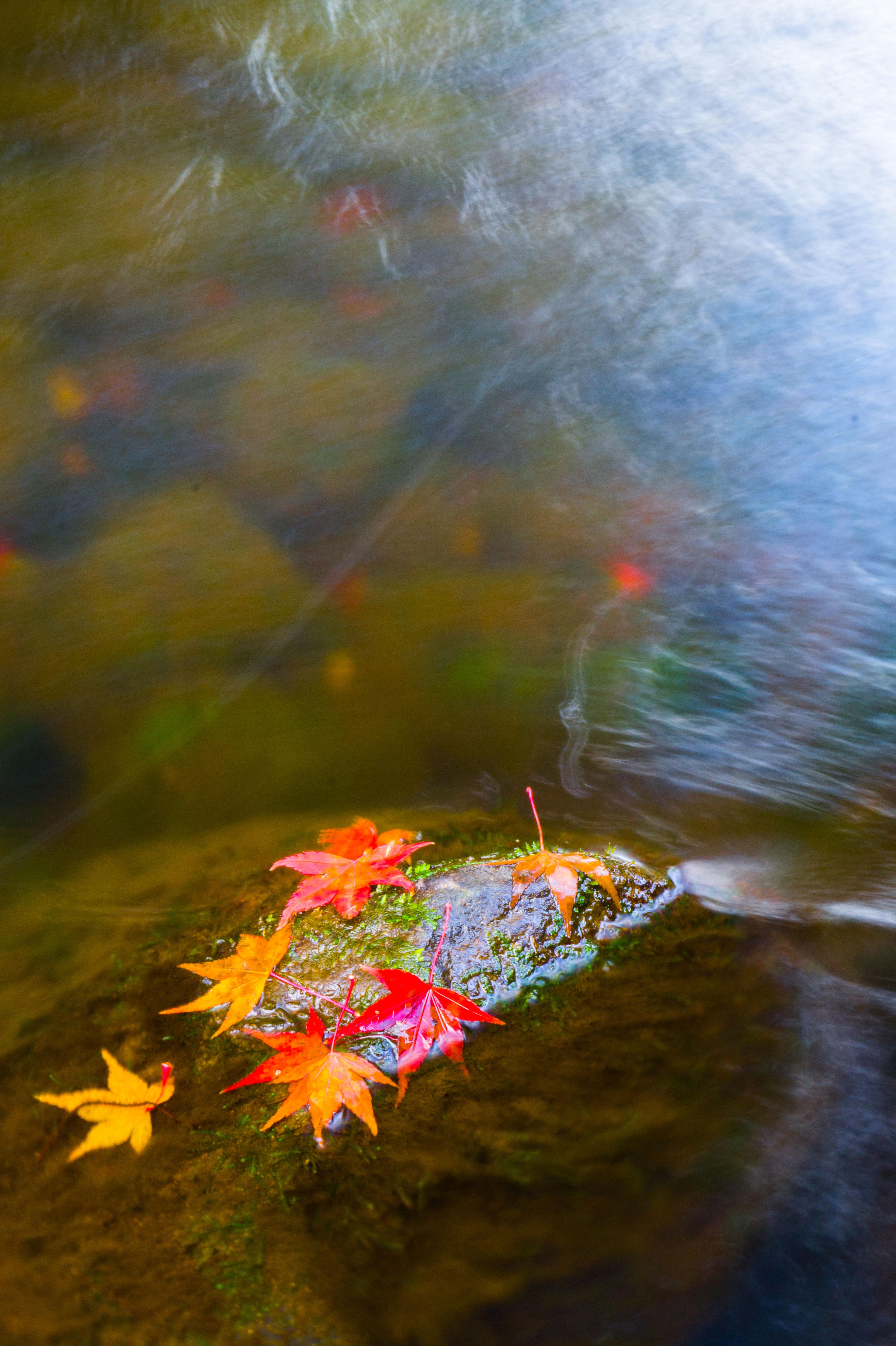 もみじ 紅葉 川 池 秋 大分県 Autumn Autumn🍁🍁🍁 Autumn Collection Colors Of Autumn River Pond Autumn Colors Sony Nex3 E18-55mm F3.5-5.6 OSS