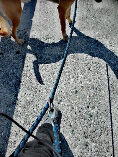 Shadow Human Leg Day Sunlight Adult On The Way Yeah Outdoors Vibrations+ Location+ Anonymous InFinity Flame GoodNotes Myyearmaview EyEAmNuHere Icd/11.0