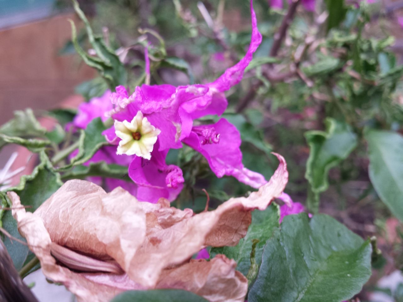 flower, fragility, freshness, day, petal, no people, plant, close-up, leaf, nature, outdoors, growth, flower head, beauty in nature