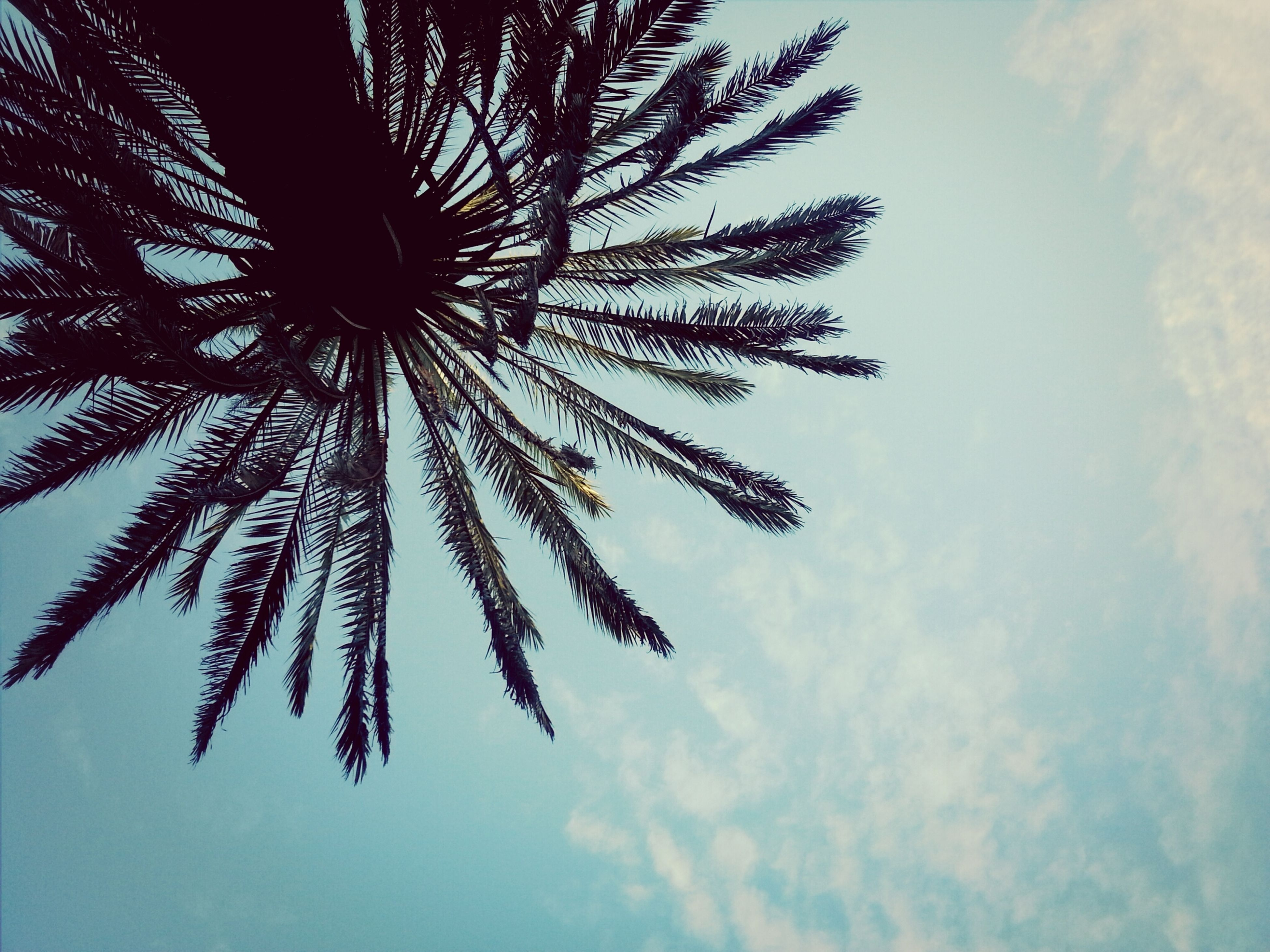 low angle view, sky, palm tree, growth, beauty in nature, tree, nature, cloud - sky, tranquility, cloud, outdoors, no people, day, cloudy, scenics, flower, tall - high, silhouette, leaf, blue