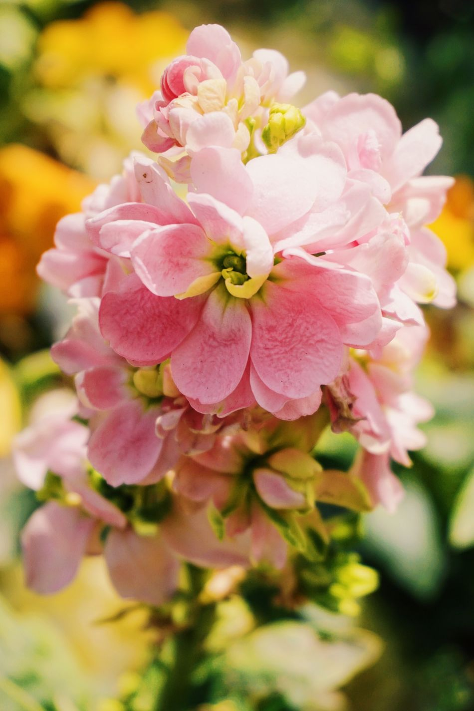 Flower Flowers Flower Collection Flowers,Plants & Garden Flowerporn Flowers, Nature And Beauty Flowers_collection