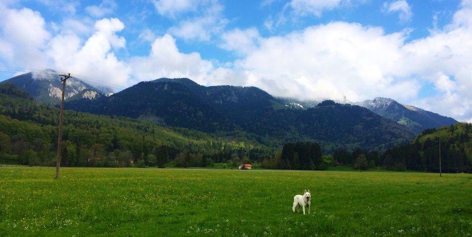 Beautiful stock photos of single, Alone, Alpine, Animal, Away