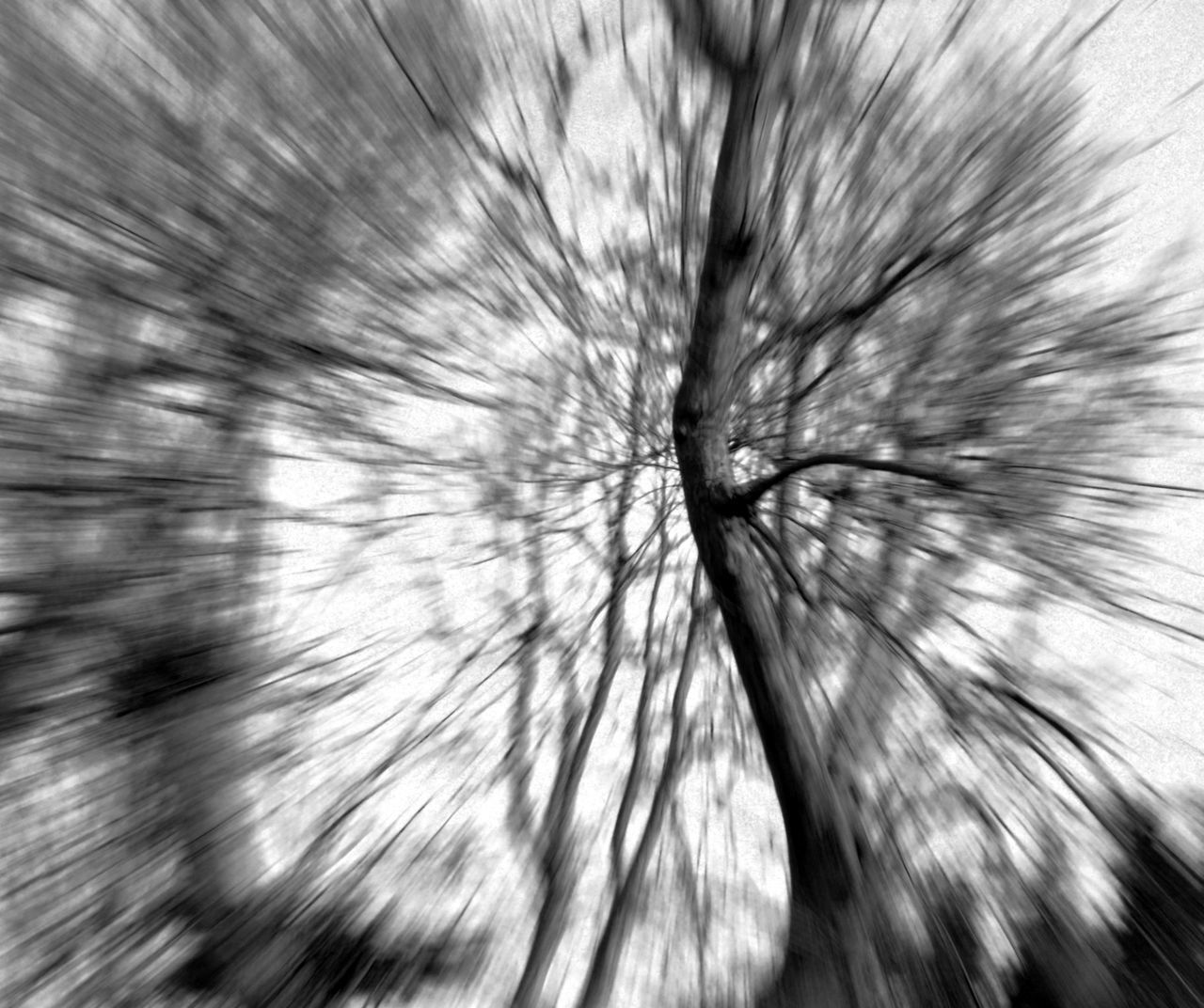 Spooky Photography Taking Photos Blackandwhite Photography Black & White Hounted Trees
