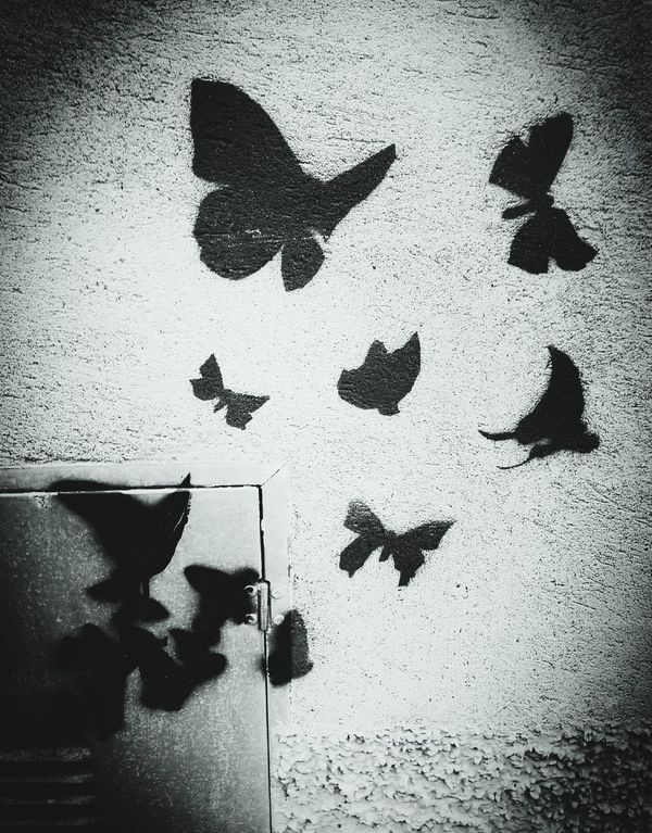Welcome To Black Shadow Focus On Shadow Silhouette No People Handprint Day Outdoors Black Light And Dark Black Color Silhouette Butterflies Flying Butterfly Butterfly Collection Butterflies Butterfly World Wall Street Wall Street Wall Painting Street Wall Art