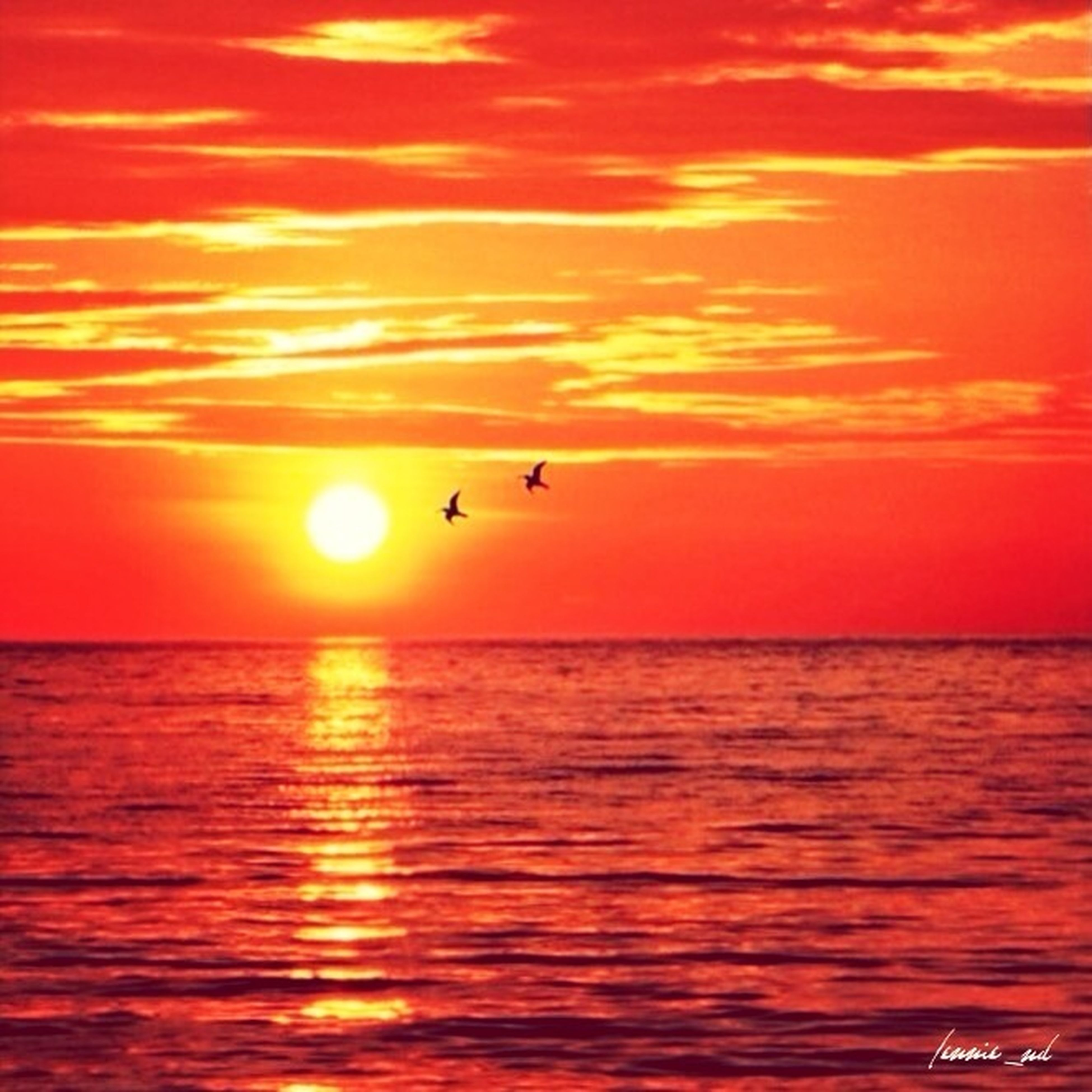 sunset, water, orange color, sun, sea, horizon over water, waterfront, scenics, bird, beauty in nature, tranquil scene, sky, tranquility, reflection, idyllic, flying, nature, rippled, animal themes, one animal