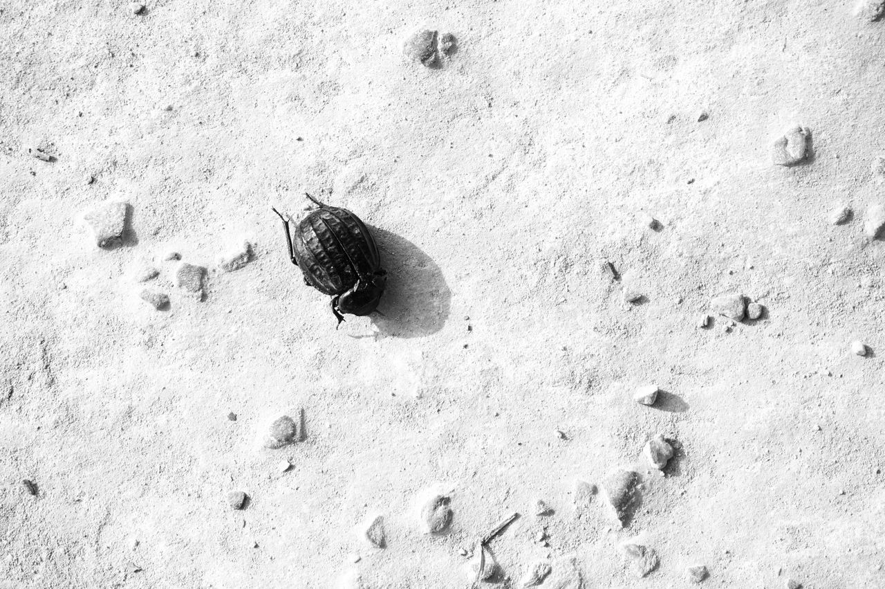 Ok I won't kill it 😪 Forgiven Graced I Hate Insects Live And Let Live Gtfo Blackandwhite Monochrome High Angle View Outdoors FootPrint Insect Forgiveness Encounter Not Happy To See You Not Happy At All Move Out Of My Way Get Moving Be Gone Mobilephotography Shootermag AMPt_community Vscocam VSCO Snapshots Of Life