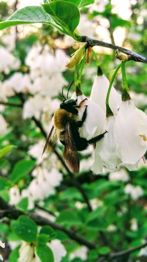 Bee Flower Close-up Insect One Animal Animals In The Wild Nature Animal Themes Animal Wildlife No People