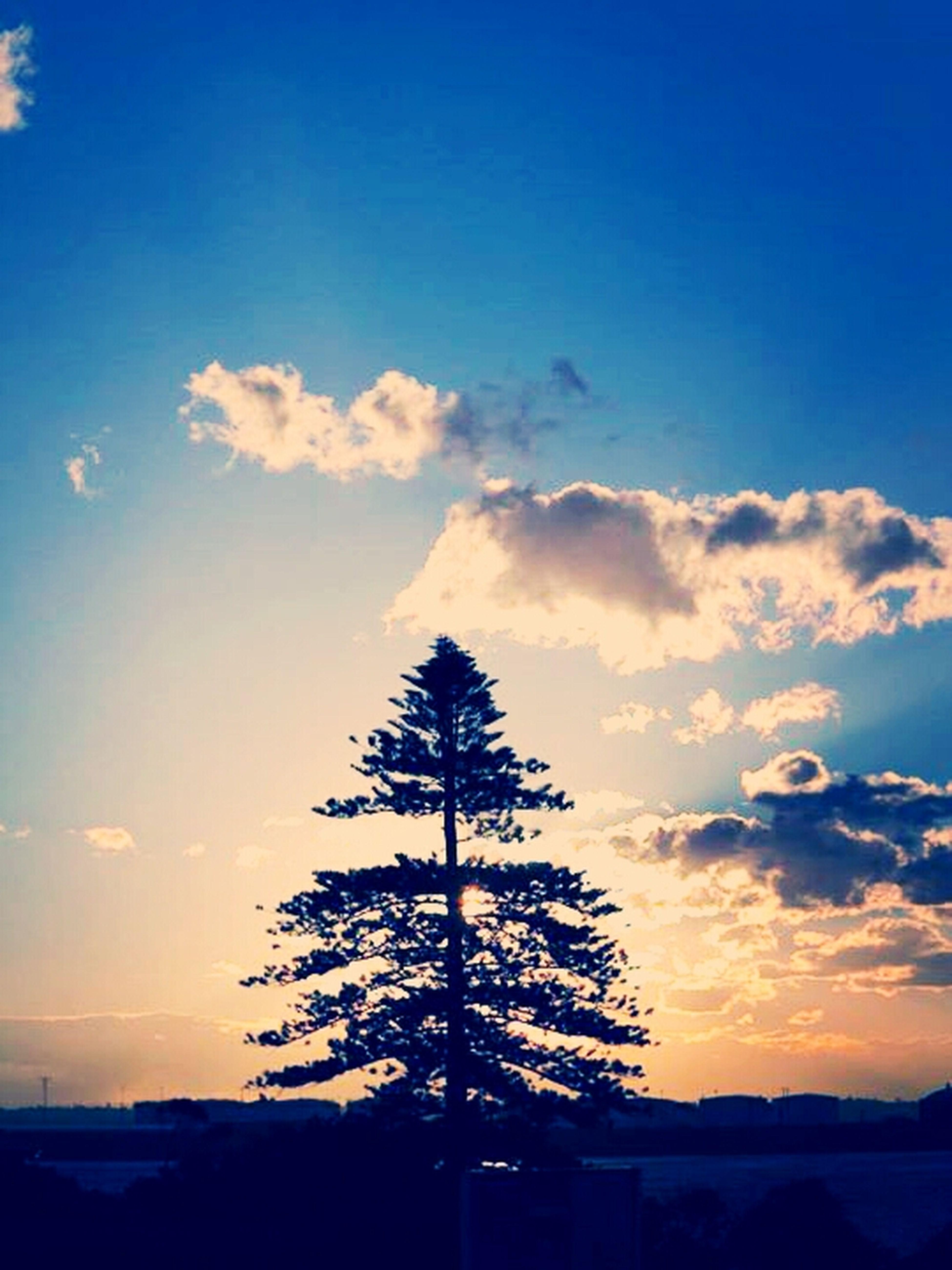 pine tree in afternoon sun! Sunset_collection Sunset Sunsetlover EyeEm Best Shots - Sunsets + Sunrise