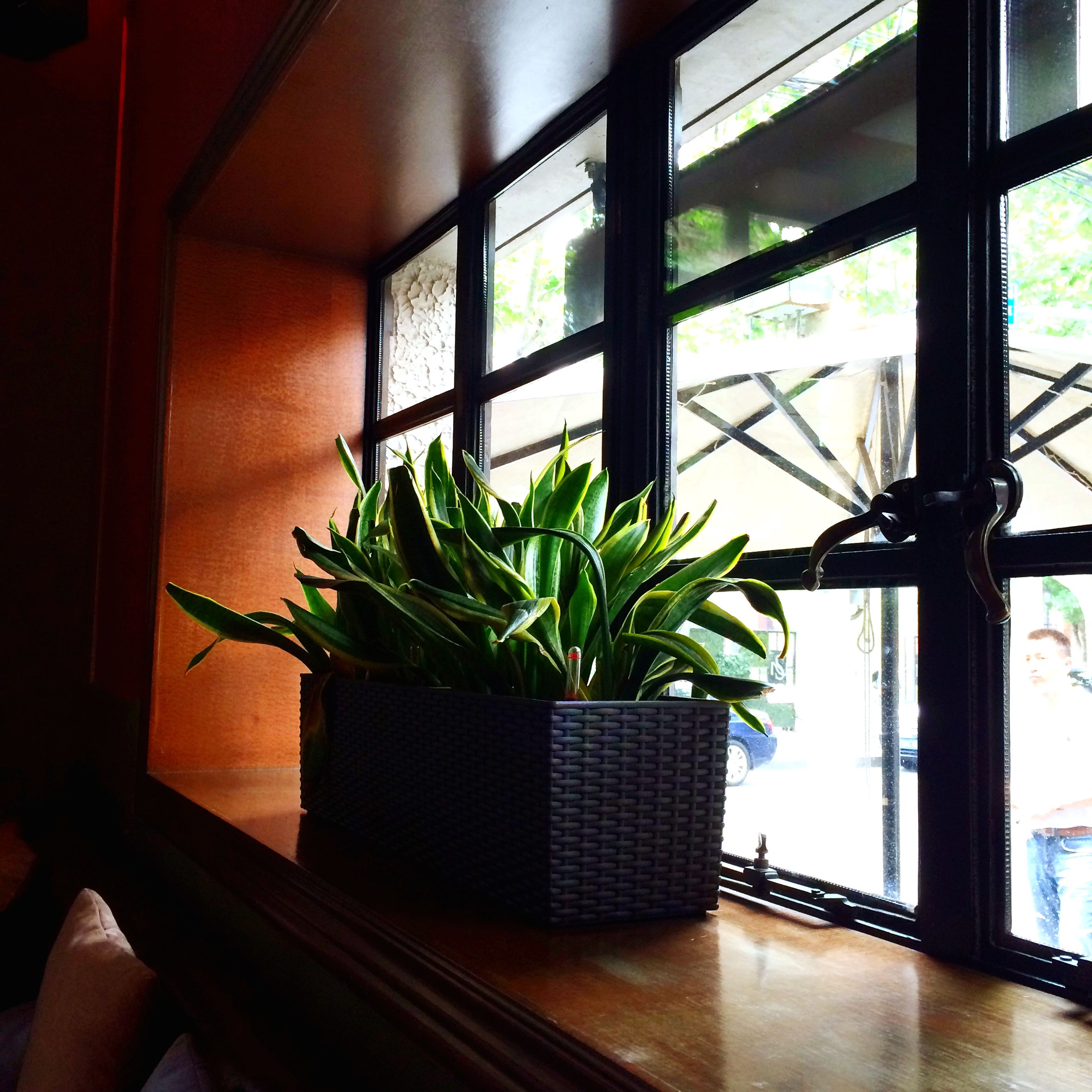 indoors, window, potted plant, green color, plant, growth, leaf, glass - material, home interior, built structure, house, architecture, transparent, window sill, no people, day, green, close-up, houseplant, sunlight