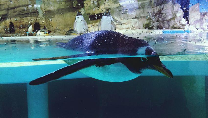 Pinguin Zoo Day Enjoying Life Sea