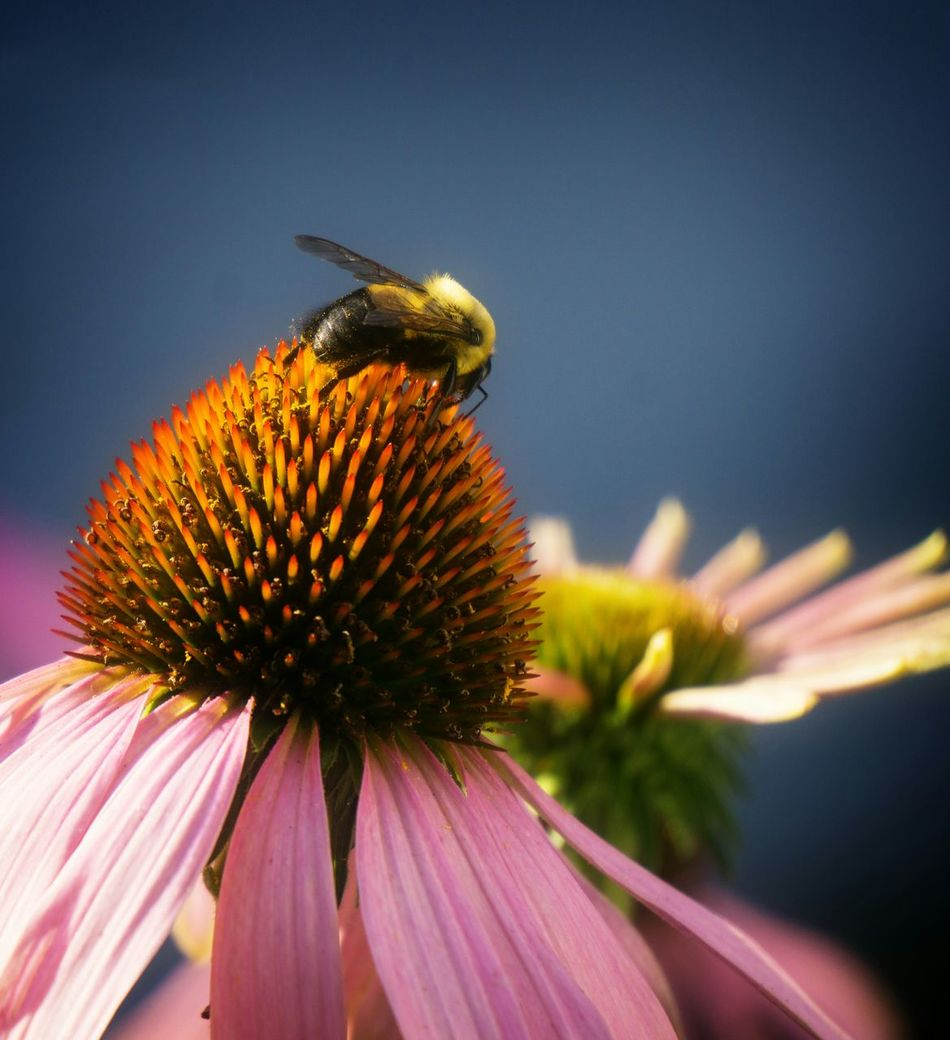 Beautiful stock photos of bee, , Vertical Image, beauty in nature