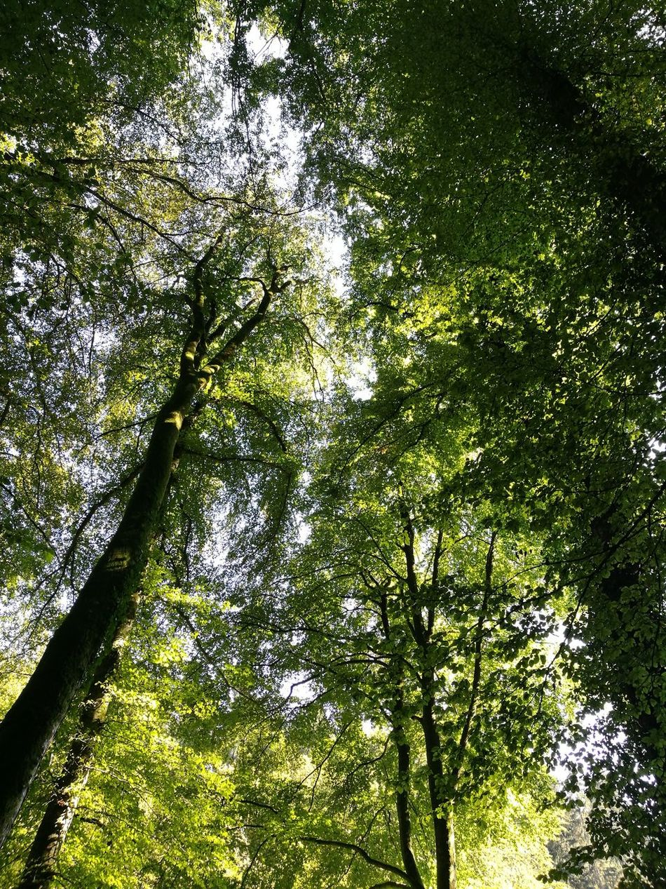 Tree Beauty In Nature Sky Green Color Low Angle View