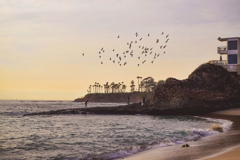 Watching the Birds flying circles over the cove at Heislerpark in Laguna Beach