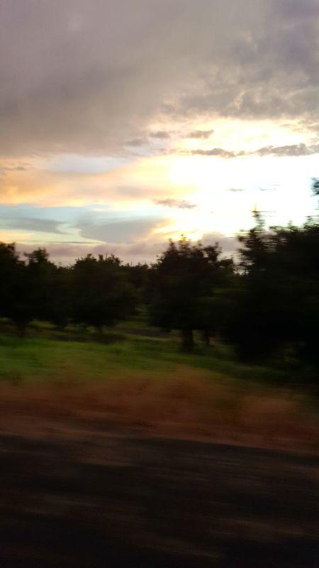 South Kona Coast Macadamia Nut Trees Sunset Tree Nature Cloud - Sky Landscape No People Outdoors Multi Colored Beauty In Nature Scenics Day Sky Taken From Moving Vehicle Aloha Hawaii Big Island Hawaii Namaste ❤ Forest
