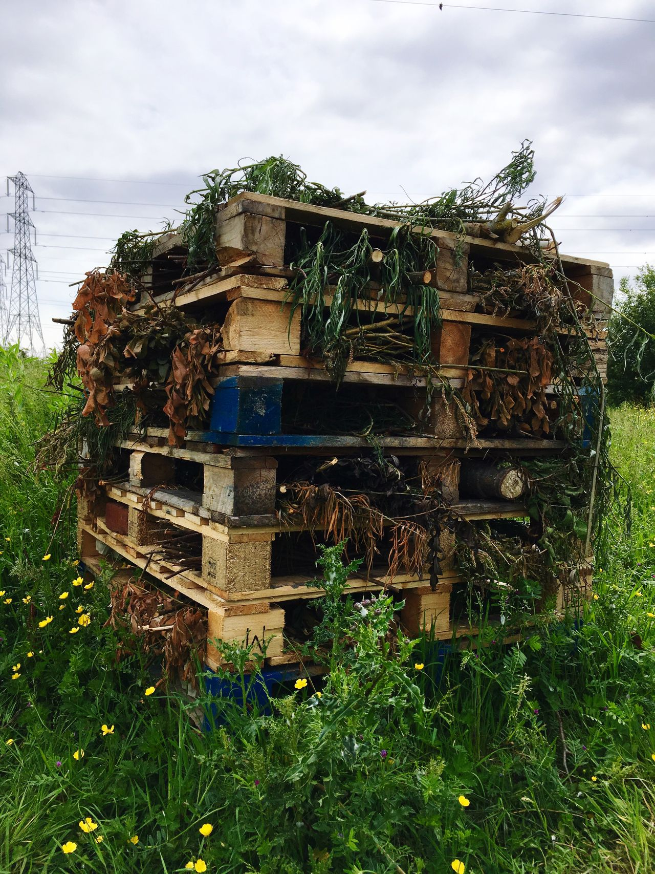 Insect Apartments Sky Field Grass No People Day Beehive Stack Outdoors Growth Nature Wood - Material Plant Cloud - Sky Green Color Agriculture Tree APIculture