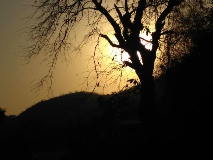 Sunset Tree Sunset Silhouette Nature Branch Sky Sun Tranquility Beauty In Nature No People Bare Tree Outdoors Scenics Tree Area Day
