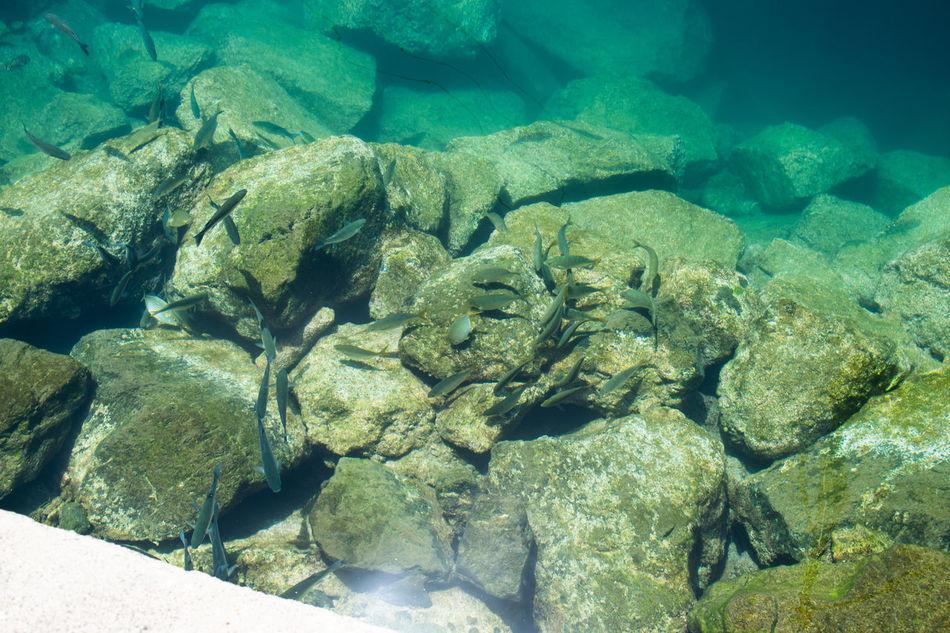Azul Chapuzon Cristalina Mar Cantabrico Paraíso Paz Peces Tranquilidad