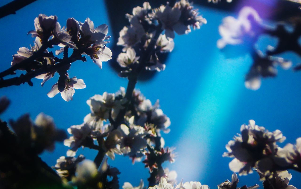 Blossoms  Almond Orchard Sunshine Spring Day EyeEm Nature Lover California Agriculture Blue Sky Fresh 3