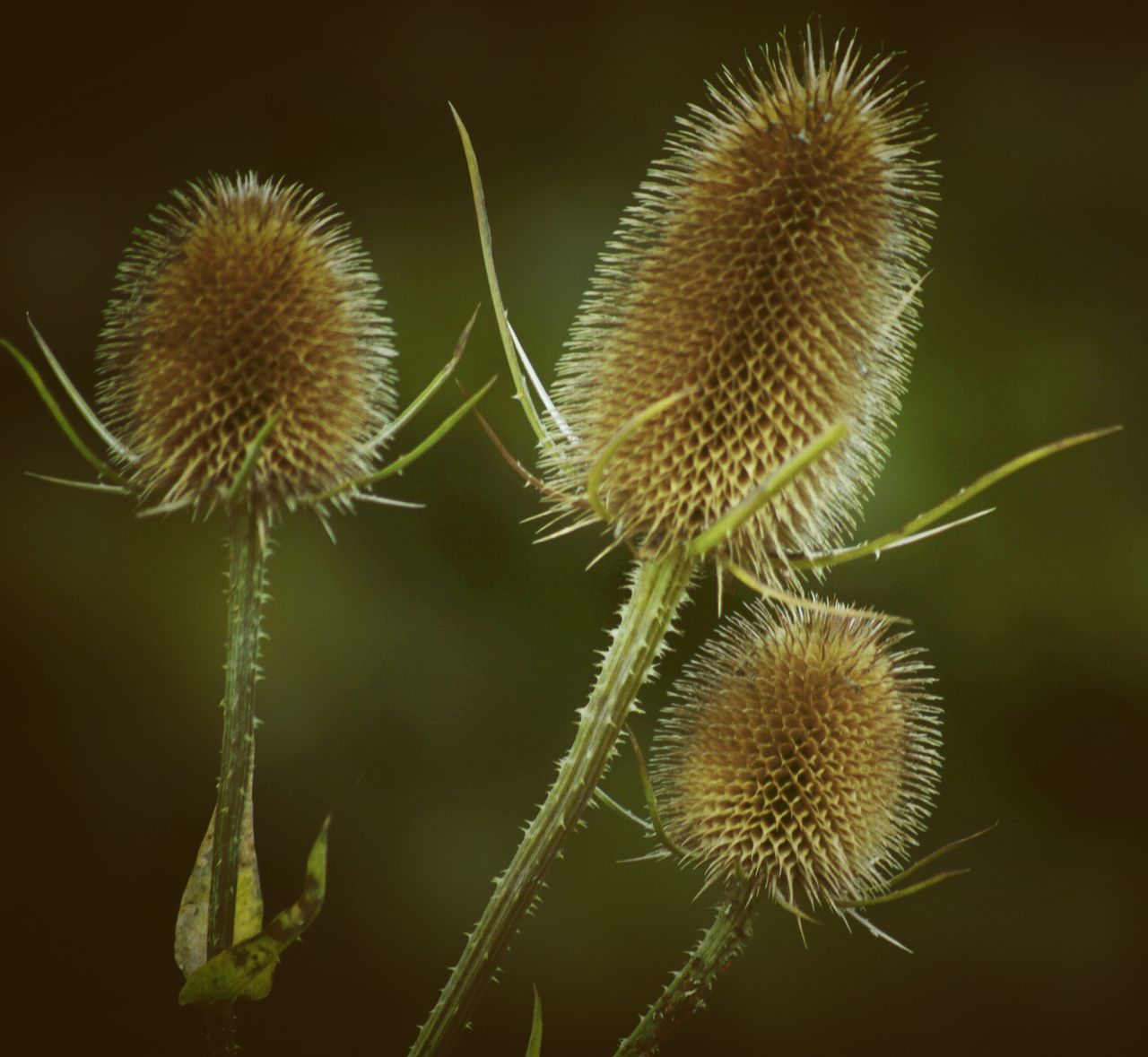 growth, plant, nature, thorn, spiked, beauty in nature, no people, close-up, green color, focus on foreground, freshness, day, outdoors, cactus, flower, thistle