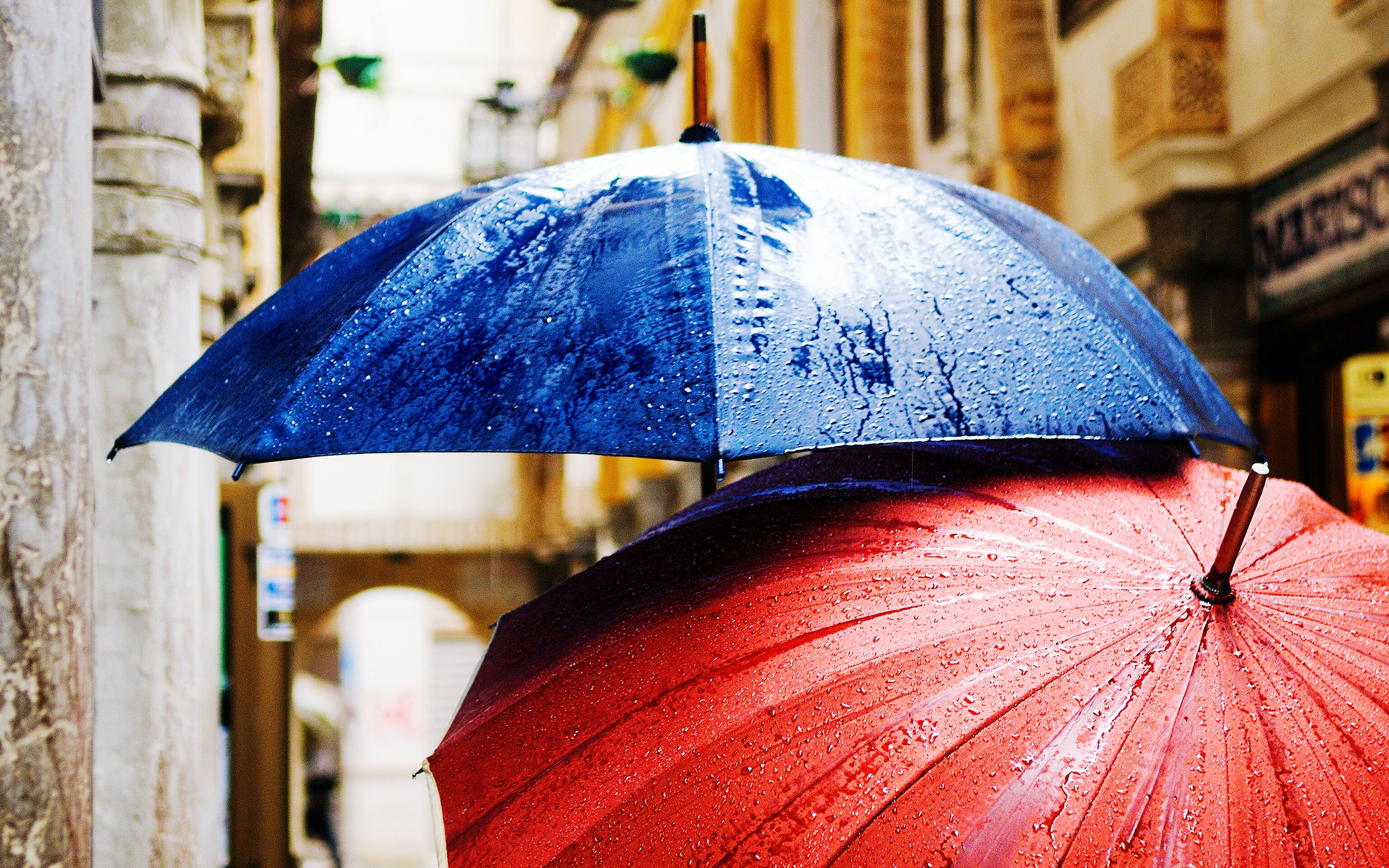 close-up, focus on foreground, building exterior, purple, architecture, built structure, blue, drop, wet, day, outdoors, umbrella, season, multi colored, fragility, selective focus, no people, weather, city, street