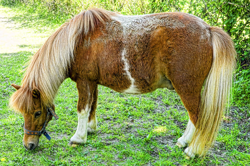 Animal Animal Head  Animal Markings Animal Themes Day Field Grass Green Color Horse Nature No People Outdoors Paard Pferd Standing Tier Zoo