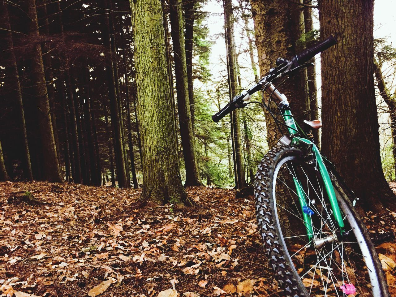 Traveling Home For The Holidays Bicycle Forest Nature High Contrast Clarity Mode Of Transport Bike Outdoors No People Calm Beautiful Light Winter Morning