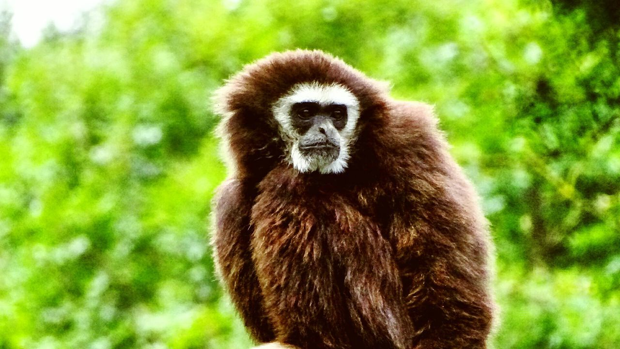 One Animal Animal Themes Animals In The Wild Nature Animal Wildlife Mammal No People Day Primate Outdoors Portrait Close-up Monkey Animal Animals In The Wild Wildlife Wild Wildlife Photography Wild Animal Animal Photography Animal Portrait Amateurphotographer  SonyHX400V Sony Amteurphotographer