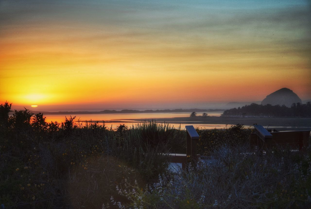 Sunset Scenics Nature Silhouette Beauty In Nature Tranquil Scene Tranquility Sky Water Outdoors Sea No People Tree Grass Horizon Over Water Day Beauty In Nature California Los Osos, Ca Landscape Eye4photography  EyeEm