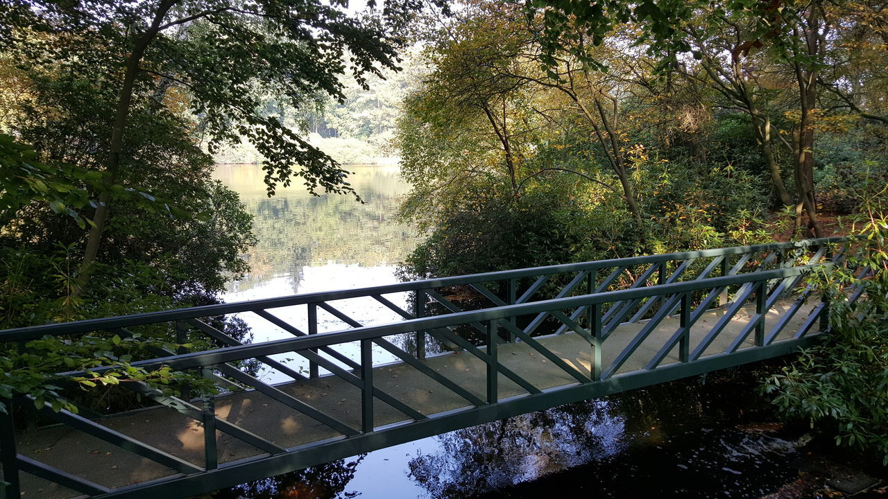 Tree Railing Water Growth Bridge - Man Made Structure River Branch Nature Scenics Day Sky Outdoors Tranquil Scene Beauty In Nature No People Flowing Water Majestic Tranquility Green Color Railings