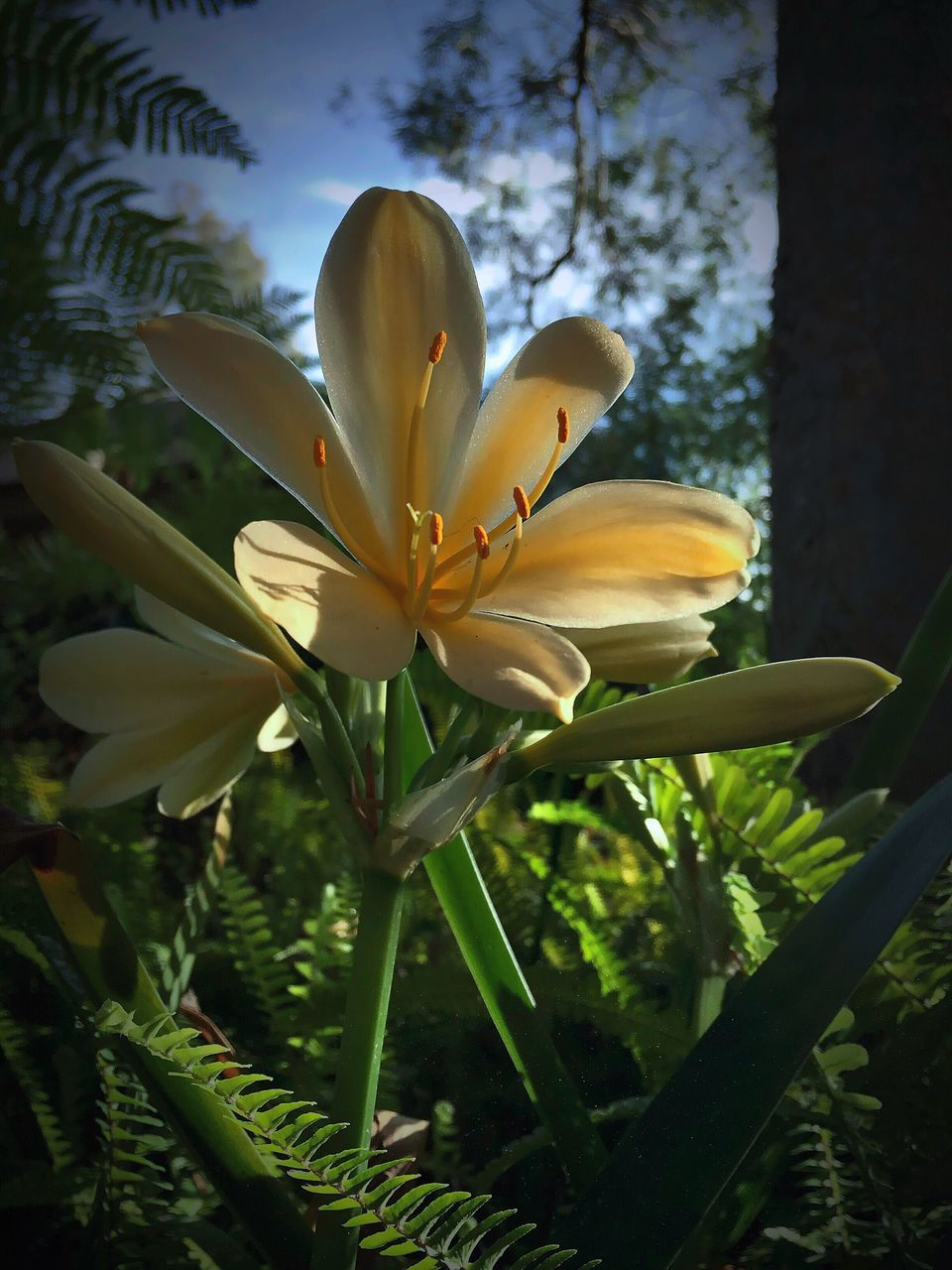 flower, petal, growth, fragility, nature, beauty in nature, flower head, freshness, plant, blooming, day, outdoors, no people, close-up, leaf, day lily, frangipani