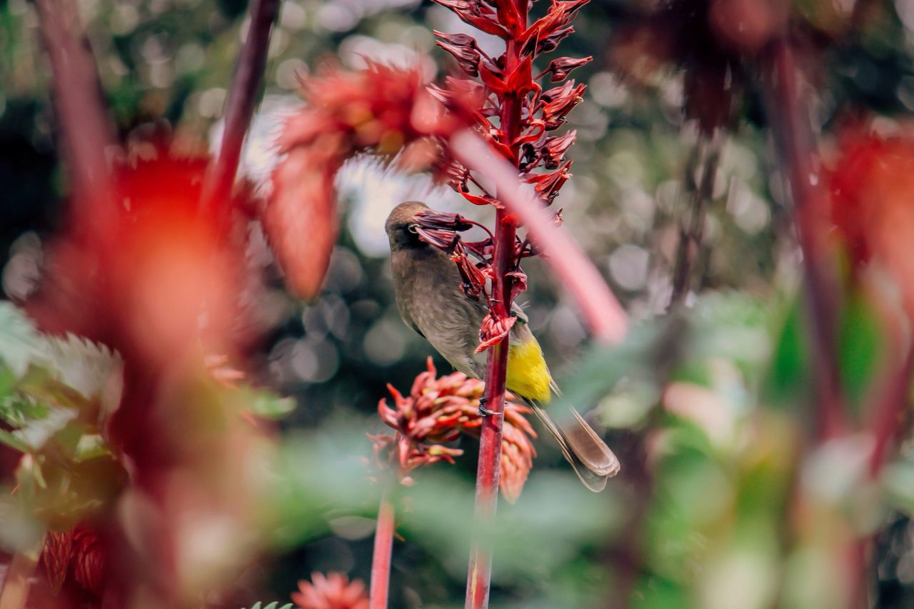 focus! Flower Plant South Africa Kirstenbosch Botanical Gardens Bird Birds Flowers Nature Nature_collection Nature Photography
