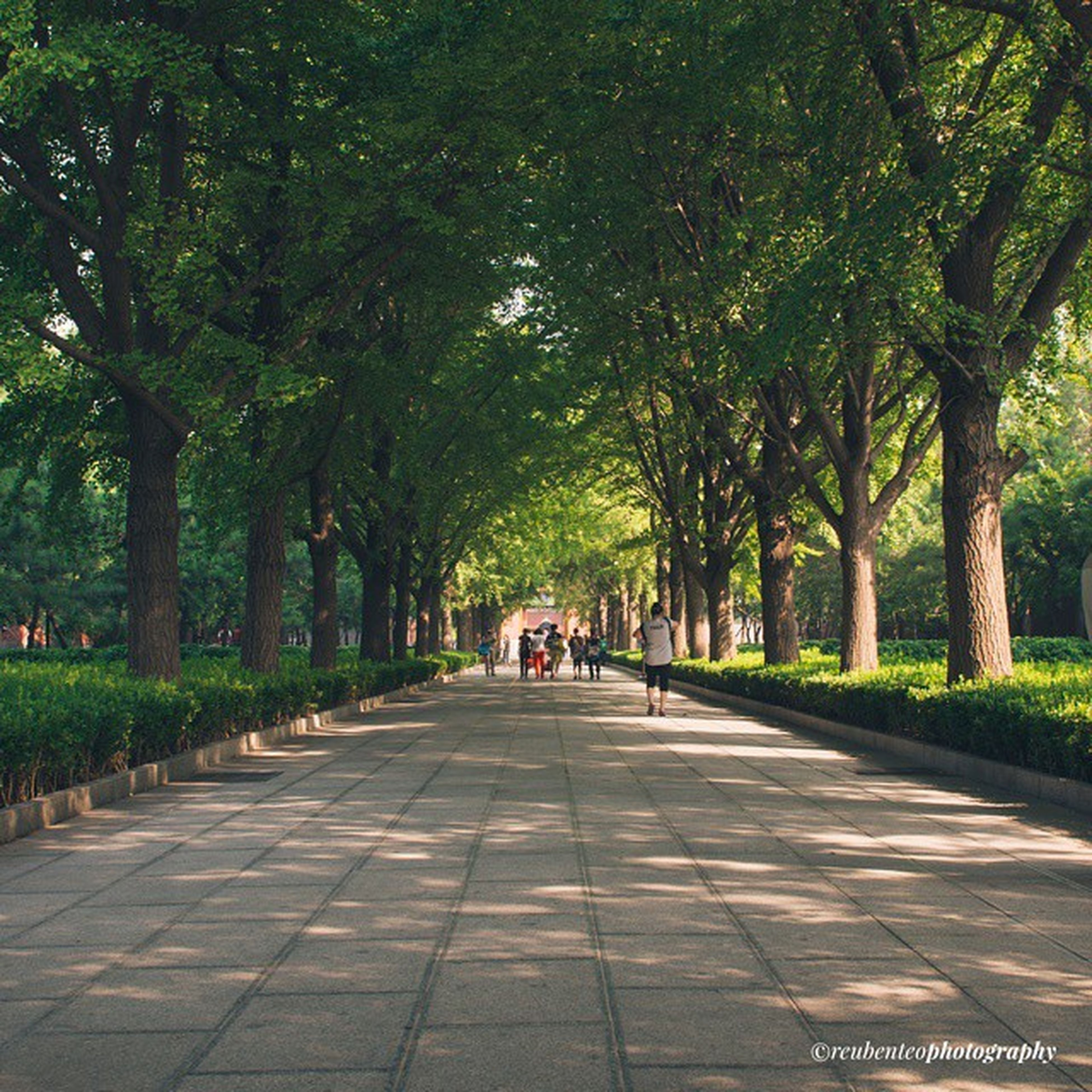 tree, the way forward, transportation, diminishing perspective, treelined, road, vanishing point, growth, street, green color, footpath, park - man made space, nature, incidental people, tree trunk, day, outdoors, branch, sunlight, empty