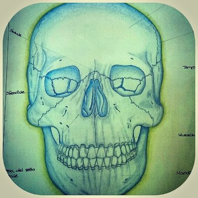 Photo Draw Skull By_me