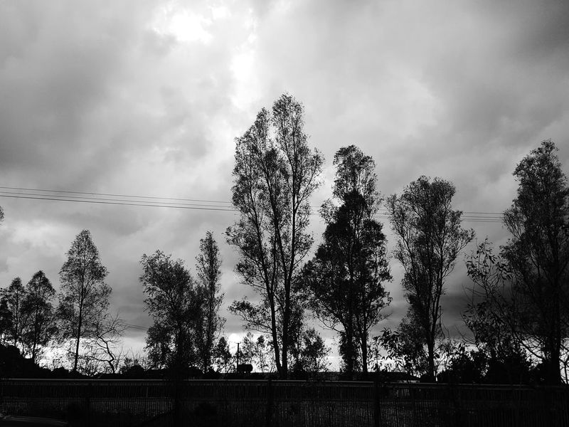 Welcome To Black Beauty In Nature Sky Cloud - Sky Nature Tree Silhouette Outdoors Desaturated No People Day Blackandwhite Daytime Photography Photoshooting Photography Black Photo Black Black And White Blackandwhite Photography Black Trees Trees Black Nature