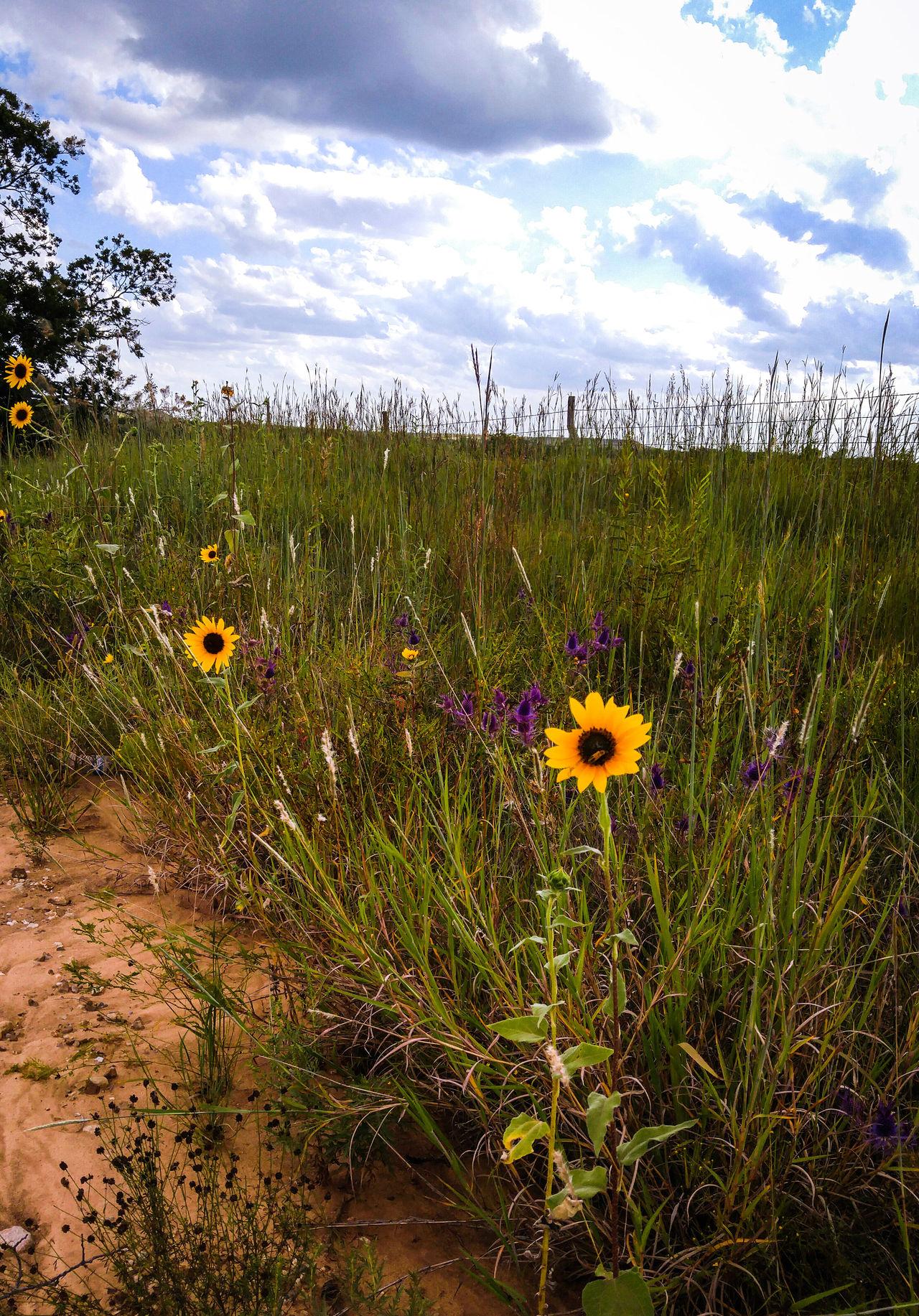 Roadside Wildflowers Nature Flower Scenics No People Landscape Rural Scene Gravel Roads Beauty In Nature Tranquil Scene Kansas