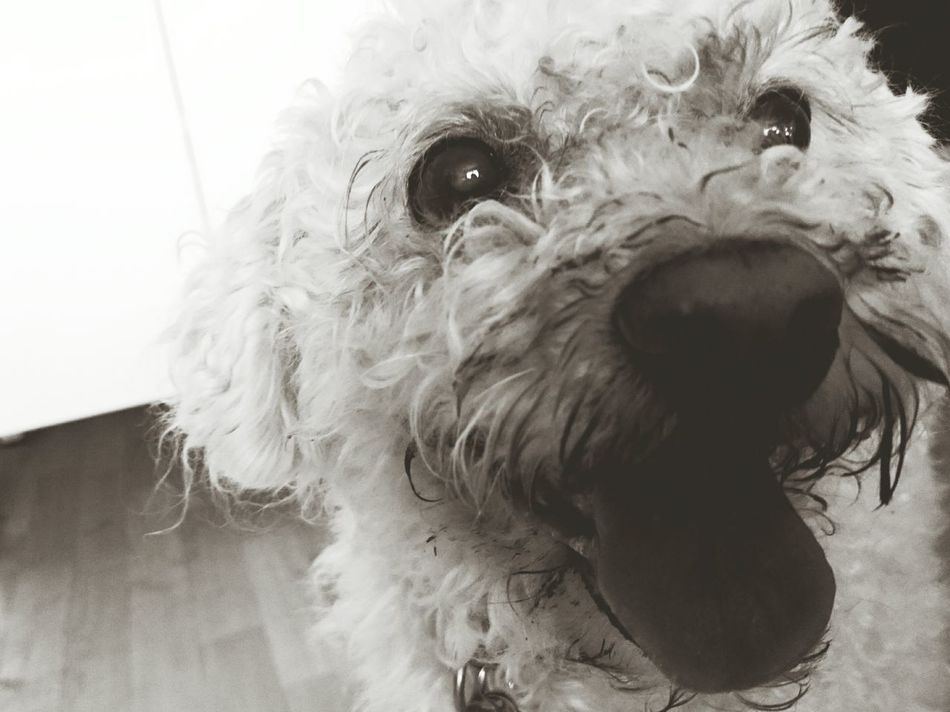 That's Lotti <3 Hello World I Love This Dog Awwwwww!!!!!!!!  Black & White B&w Monochrome Bw_collection Dog