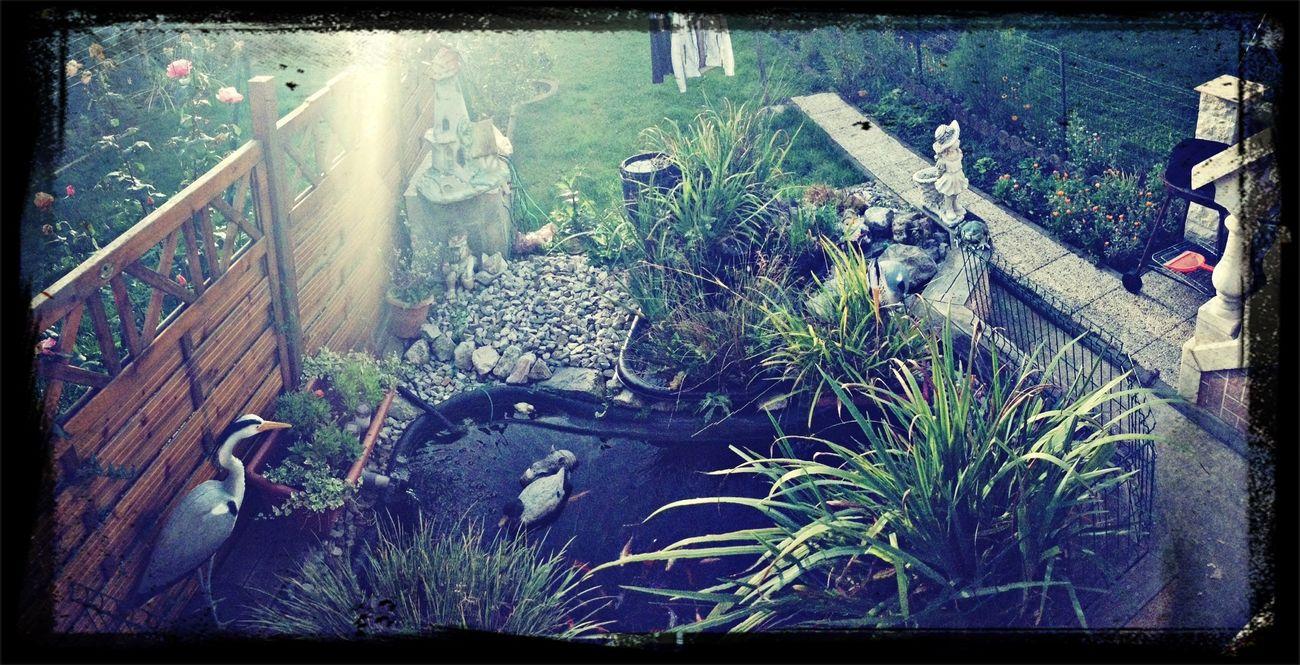 mon jardin ;)