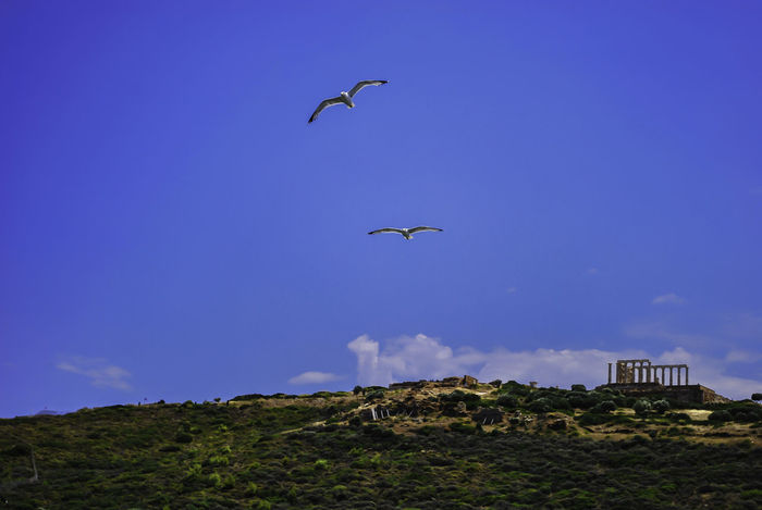 Temple of Poseidon at Sounio.. Archaeology Archeological Site Bird Blue Day Flying Greece Low Angle View Nature No People Outdoors Sky Sounio Sounion