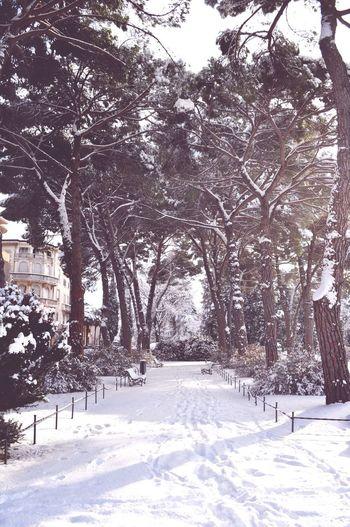 Let it snow ❄️⛄️ Snow Park Morning Winter