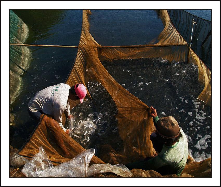 Art And Craft Day Fingerlings Fisherman Fishing Net Full Length Joel Yonzon Lifestyles Men Real People Standing Water
