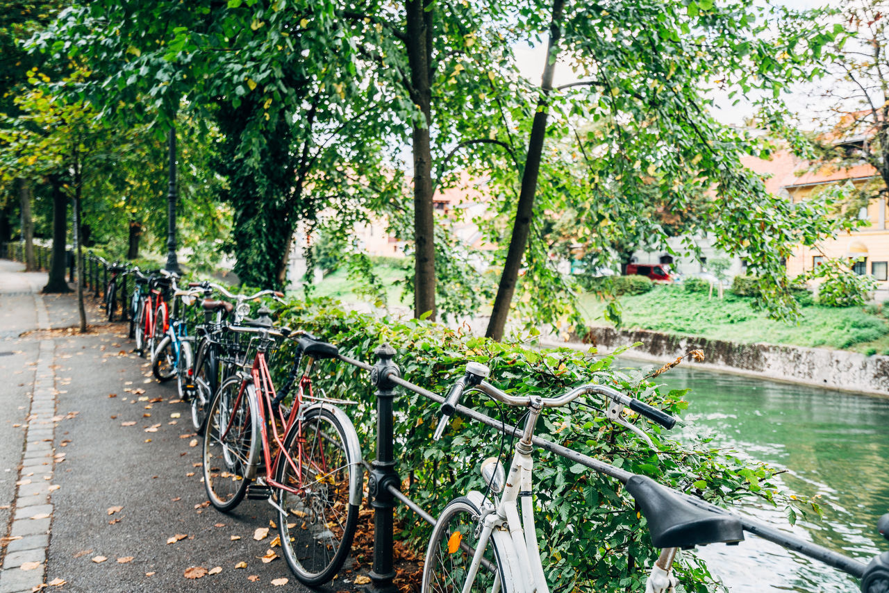 Beauty In Nature Bicycle Bicycle Rack Cycling Day Land Vehicle Mode Of Transport Mountain Bike Nature No People Outdoors Pedal Racing Bicycle Stationary Tire Transportation Travel Destinations Tree Tree Area