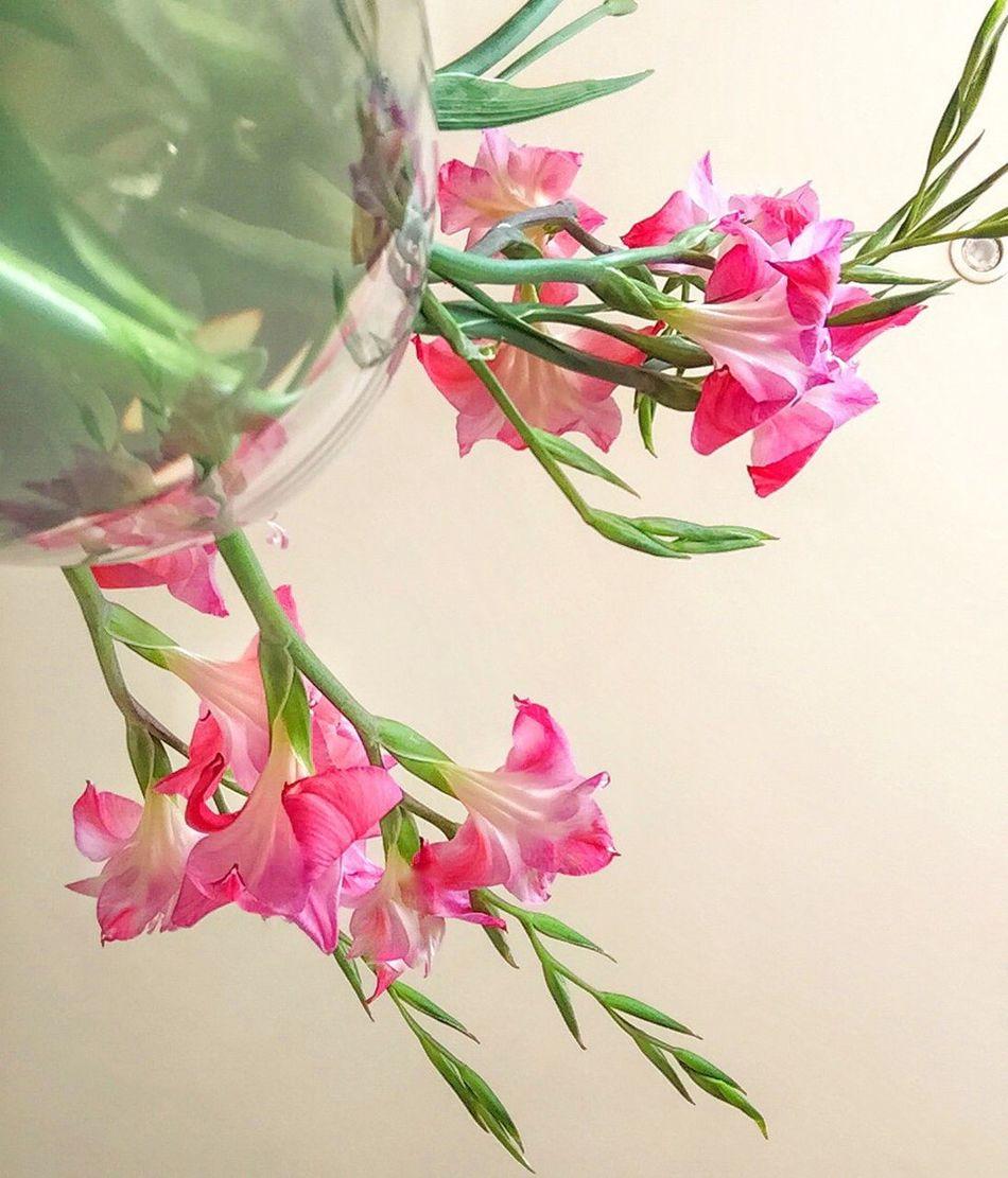 Flowers 🌸 Nature Beautiful