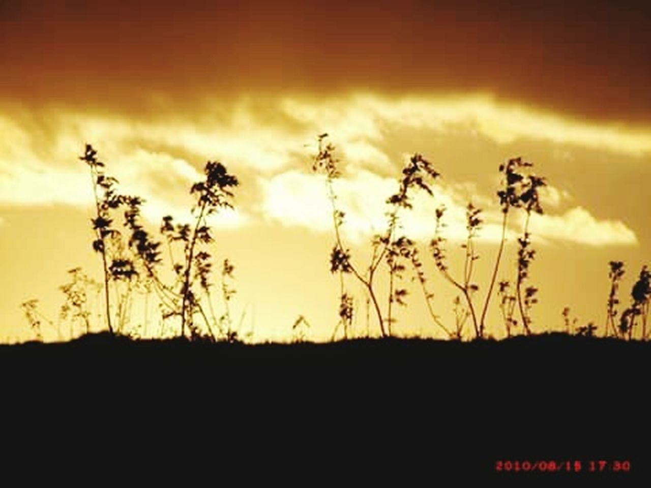 nature, silhouette, plant, sunset, cloud - sky, growth, no people, sky, landscape, outdoors, cereal plant, scenics, rural scene, grass, herbal medicine, beauty in nature, day, close-up