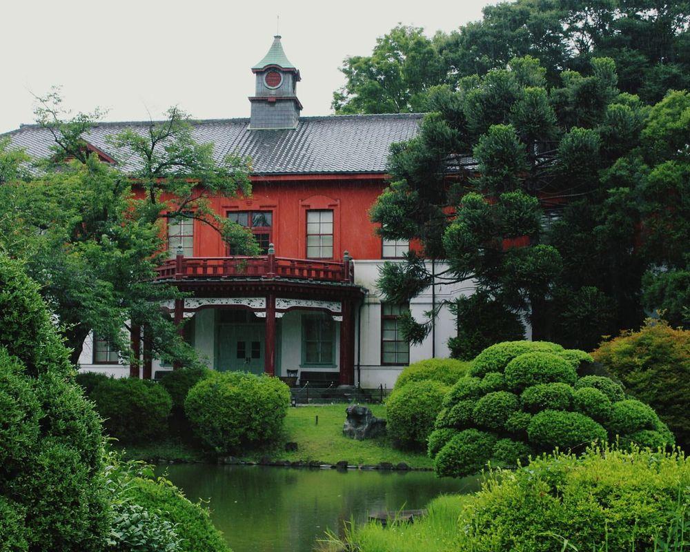 Japan Tokyo Greeeen Park Pond Japan Photography Rainy Days☔ Museum Of Modern Art 小石川植物園