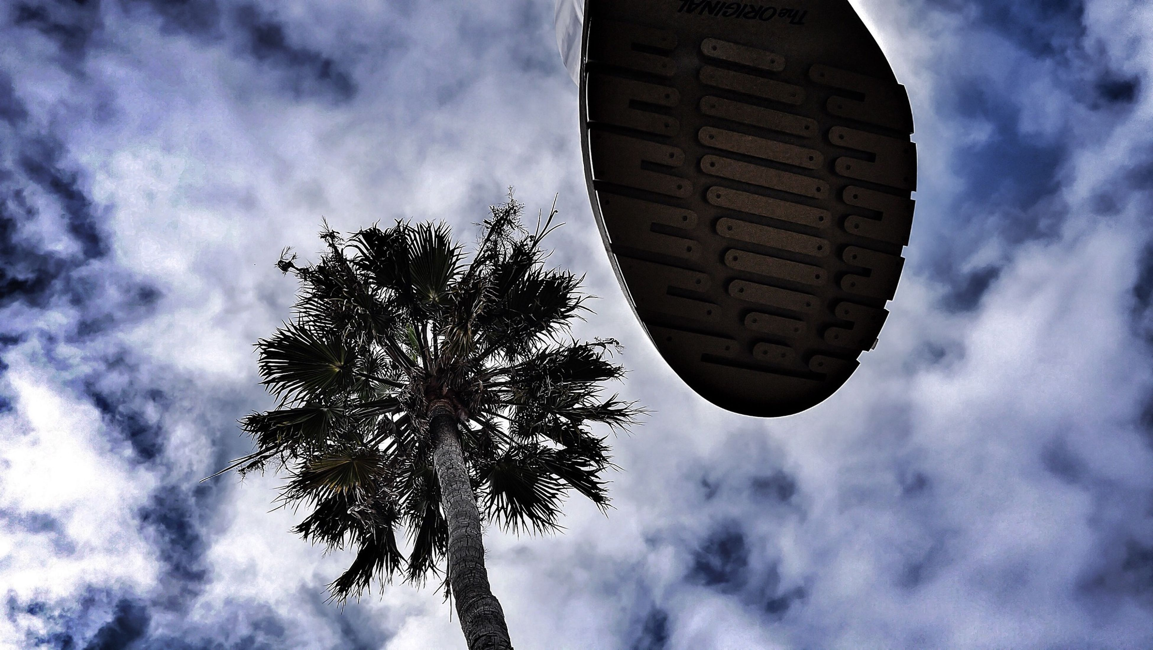 sky, cloud - sky, low angle view, cloudy, tree, cloud, tranquility, nature, growth, palm tree, beauty in nature, tranquil scene, outdoors, scenics, overcast, silhouette, no people, day, weather, leaf