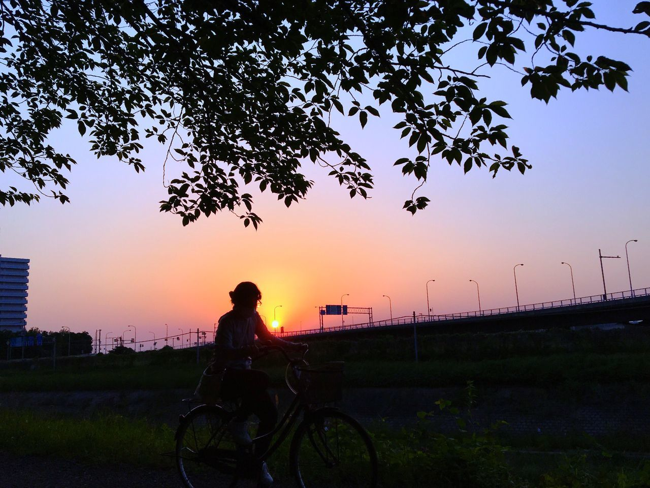 Sunset Rider Tree Bicycle Nature One Person Sky Silhouette Growth Outdoors Sitting Transportation Field Beauty In Nature Scenics Real People Grass Lifestyles Women Landscape Photography Themes