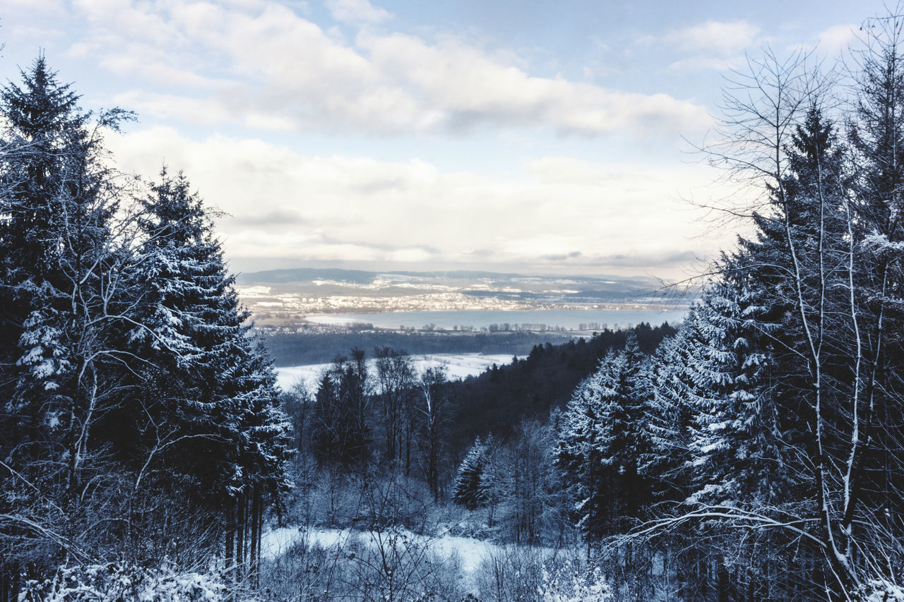 Baden-Württemberg  Beauty In Nature Bodensee Cold Temperature EyeEm Nature Lover Forest Frozen Lake Of Constance Germany Landscape Nature Nature Nature_collection Outdoors Sky And Clouds Snow Tree Tree Winter Winter Trees Winterwonderland