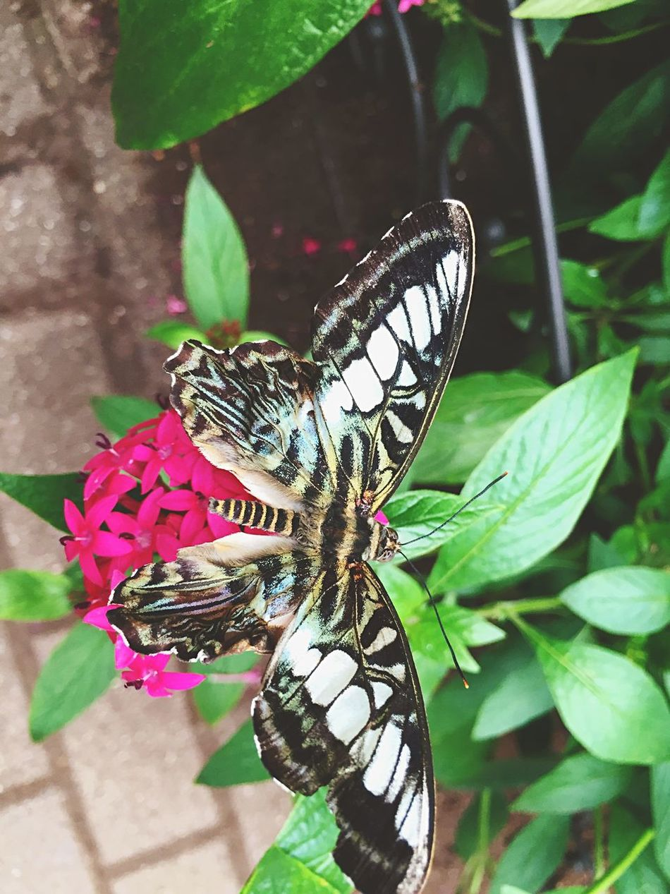 Taking Pictures Nature Flowers Butterfly Thebutterflyplace Travel Evolved