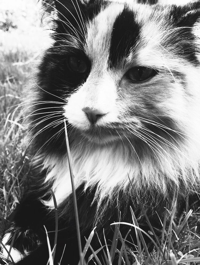 Cat Blackandwhite Blackandwhitecat my cat Frida